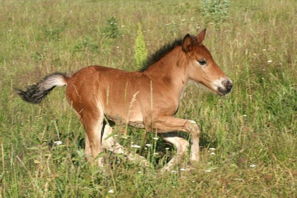 Russia: A foal has broken leg of the zoo employee