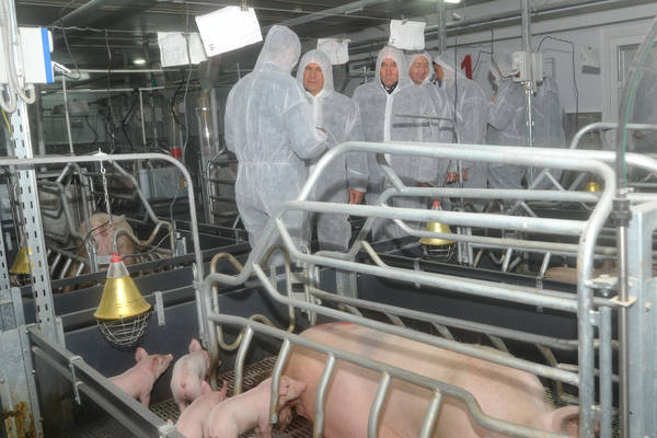 Construction of pig-breeding complex will be completed in the nearest future in Nizhny Novgorod region, Russia