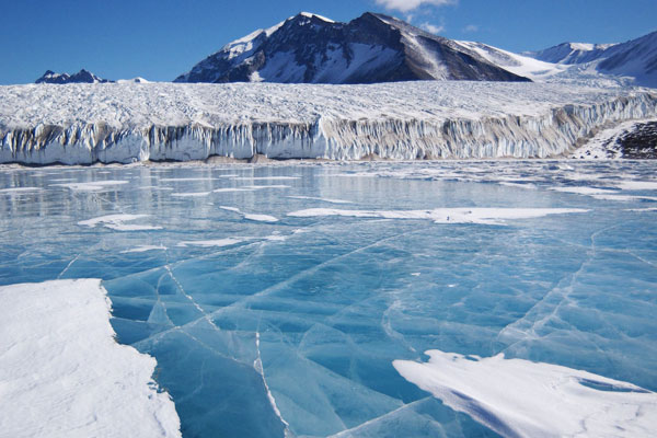 Fossils of Ancient Forests have been discovered in Antarctic