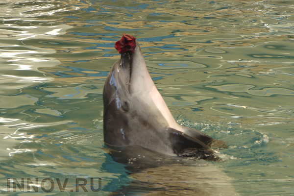 Journalists were told about Nizhny Novgorod Dolphinarium working plans, Russia